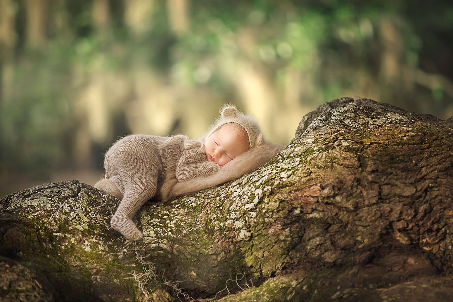 Newborn in bear bonnet in tree by Annie whitaker Photography