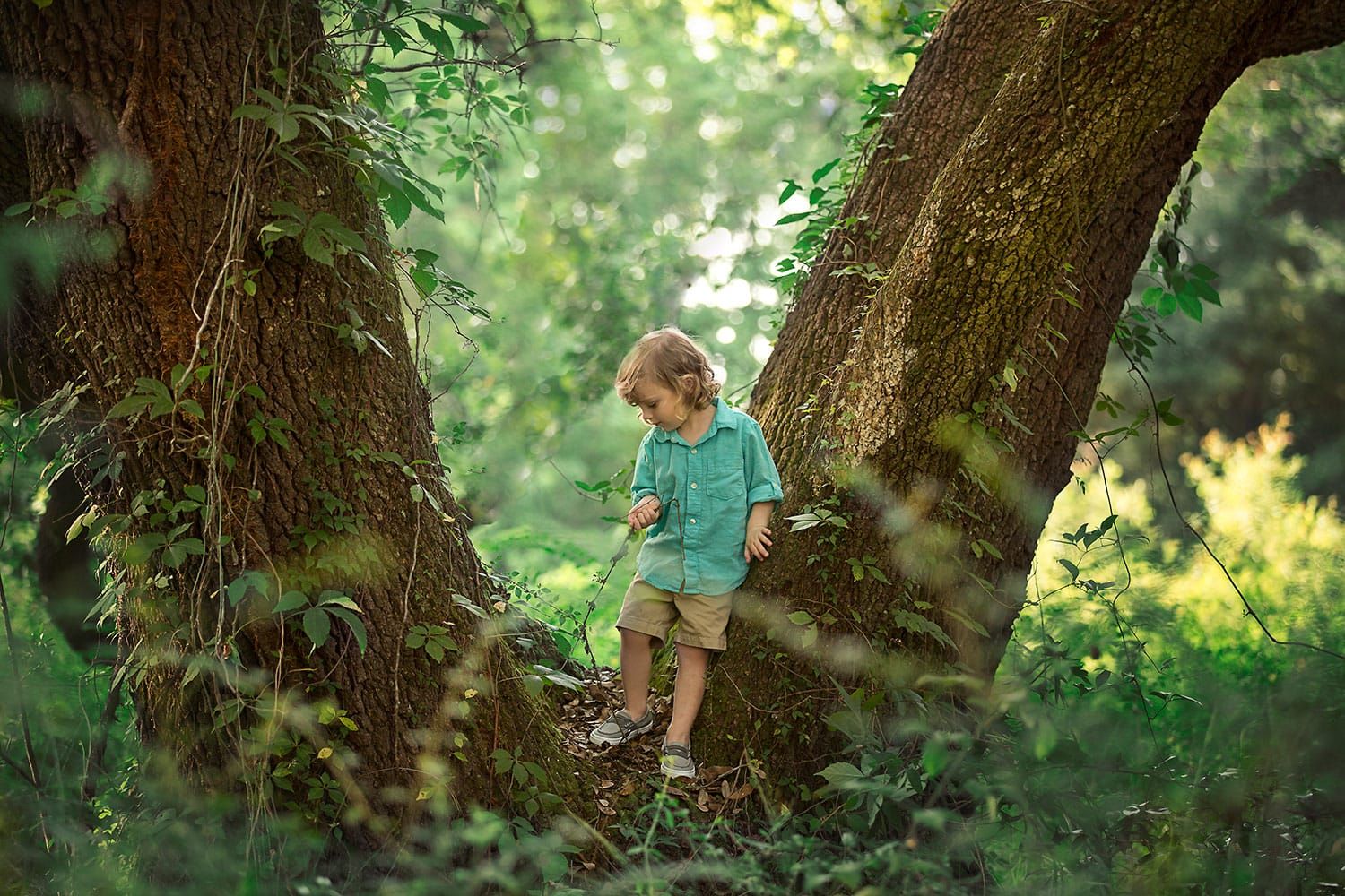 Little boy climbing large oak tree by Annie Whitaker Photography