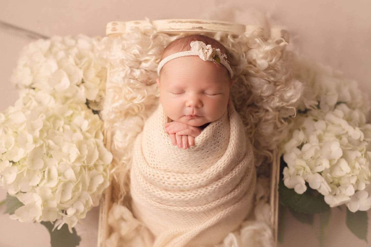 Newborn baby in cream wrap with white hydrangeas by Annie Whitaker Photography