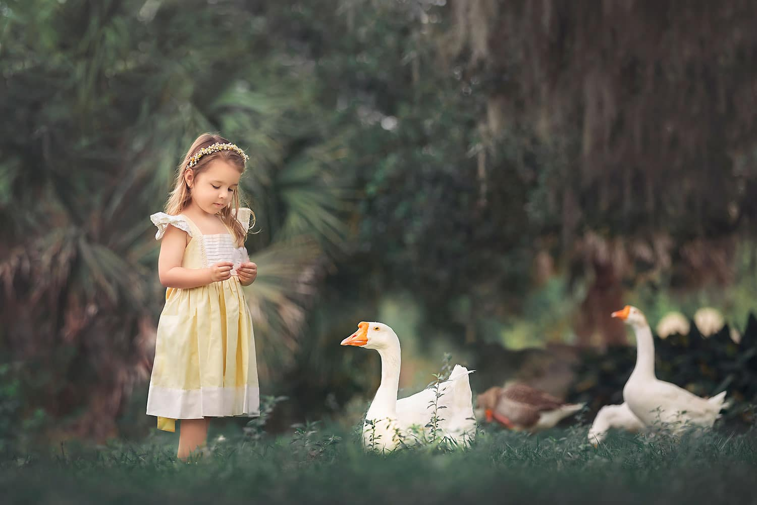 Girl feeding ducks by Annie Whitaker Photography