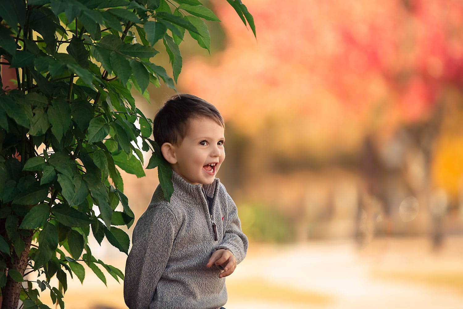 3 year old boy in grey sweater by fall leaves