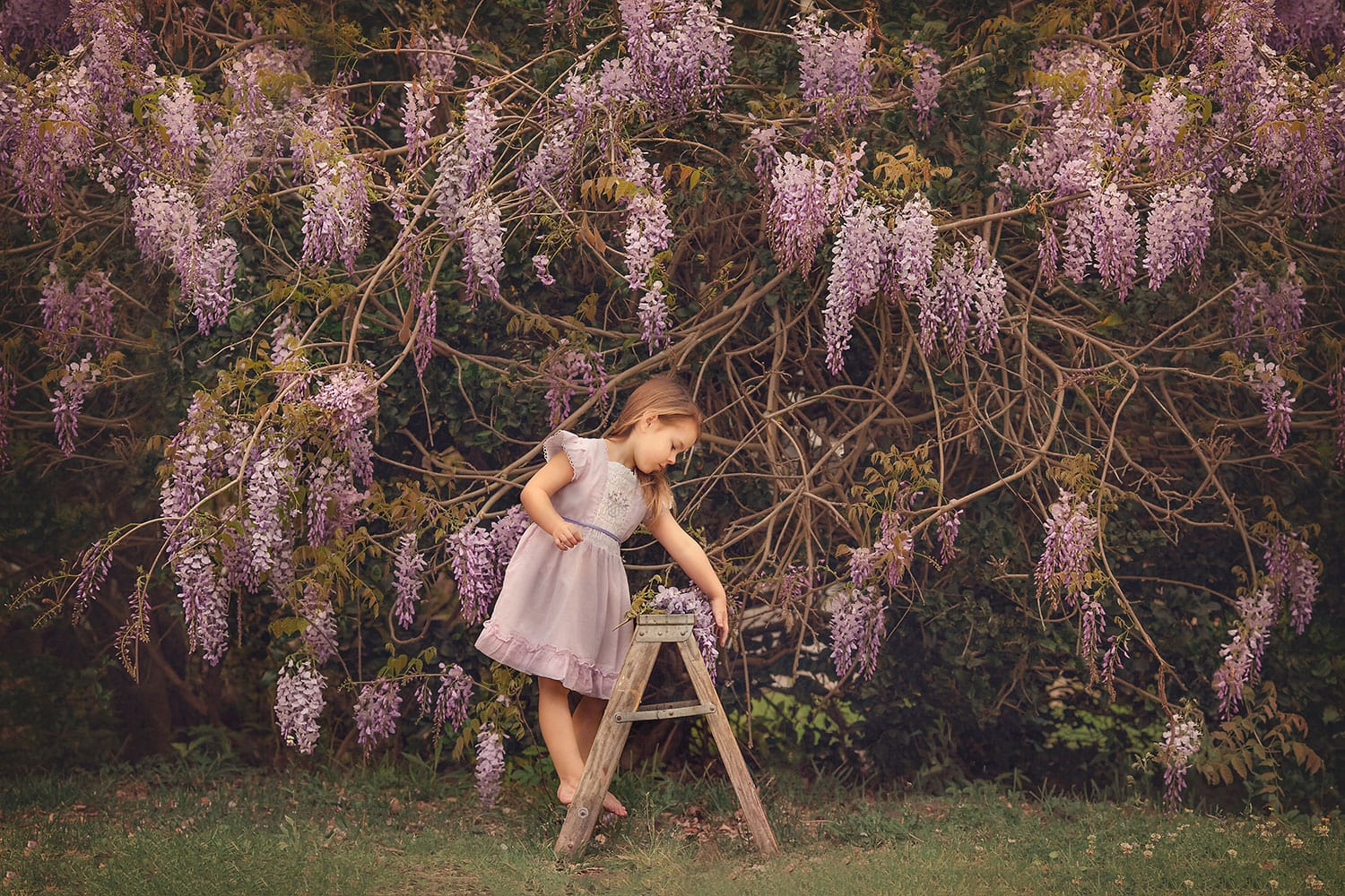 Stunning photo of four year old girl with wisteria vine