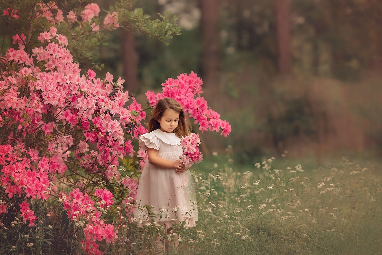 Stunning photo of four year old girl by blooming azalea bush