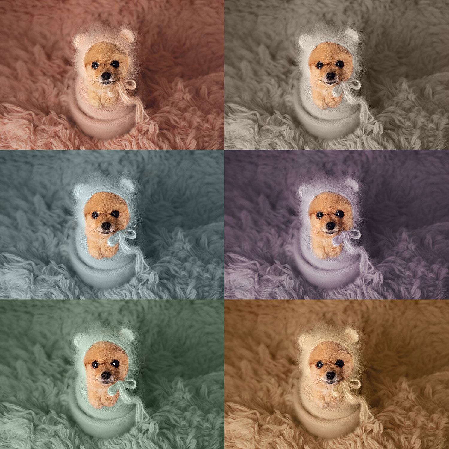 color changing action used on photo of dog