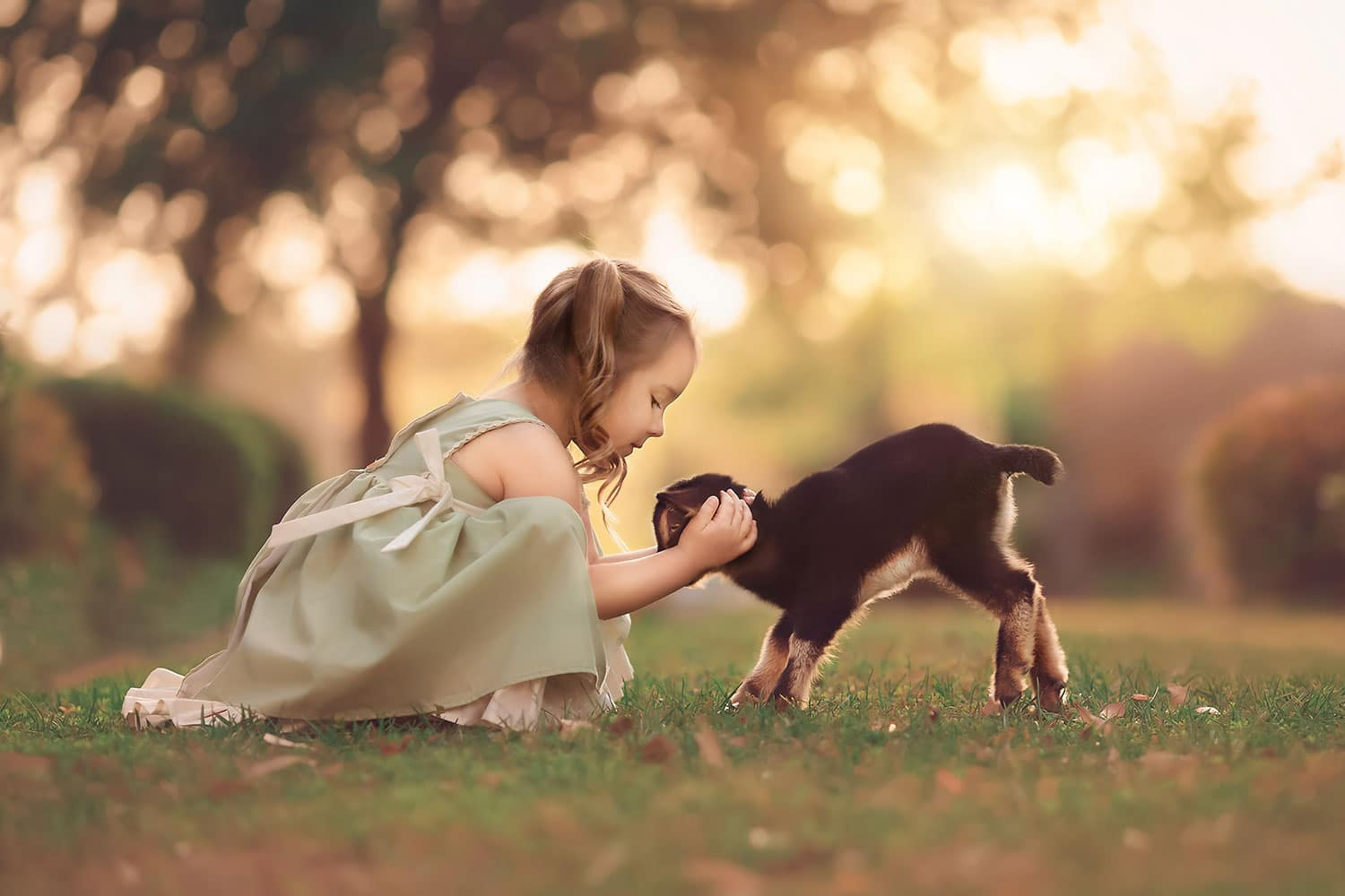 toddler with baby goat