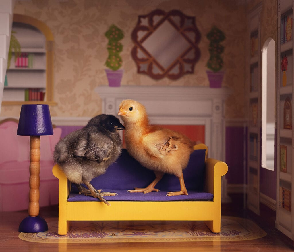 chicks on dollhouse furniture