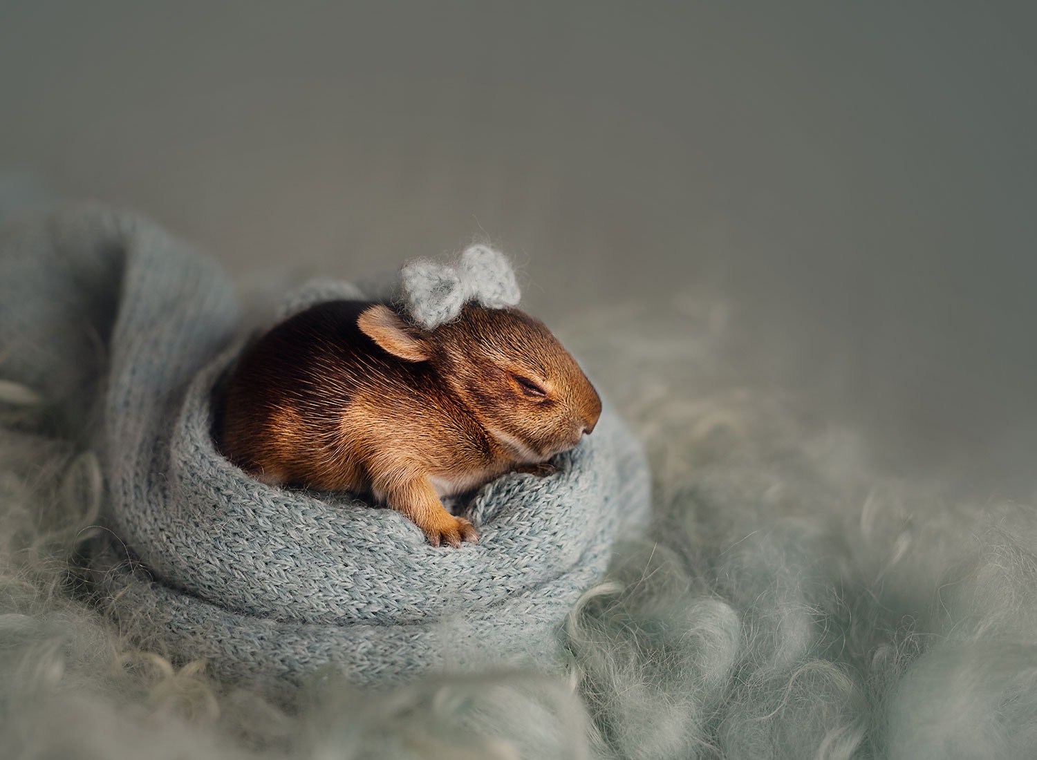 newborn bunny photo session