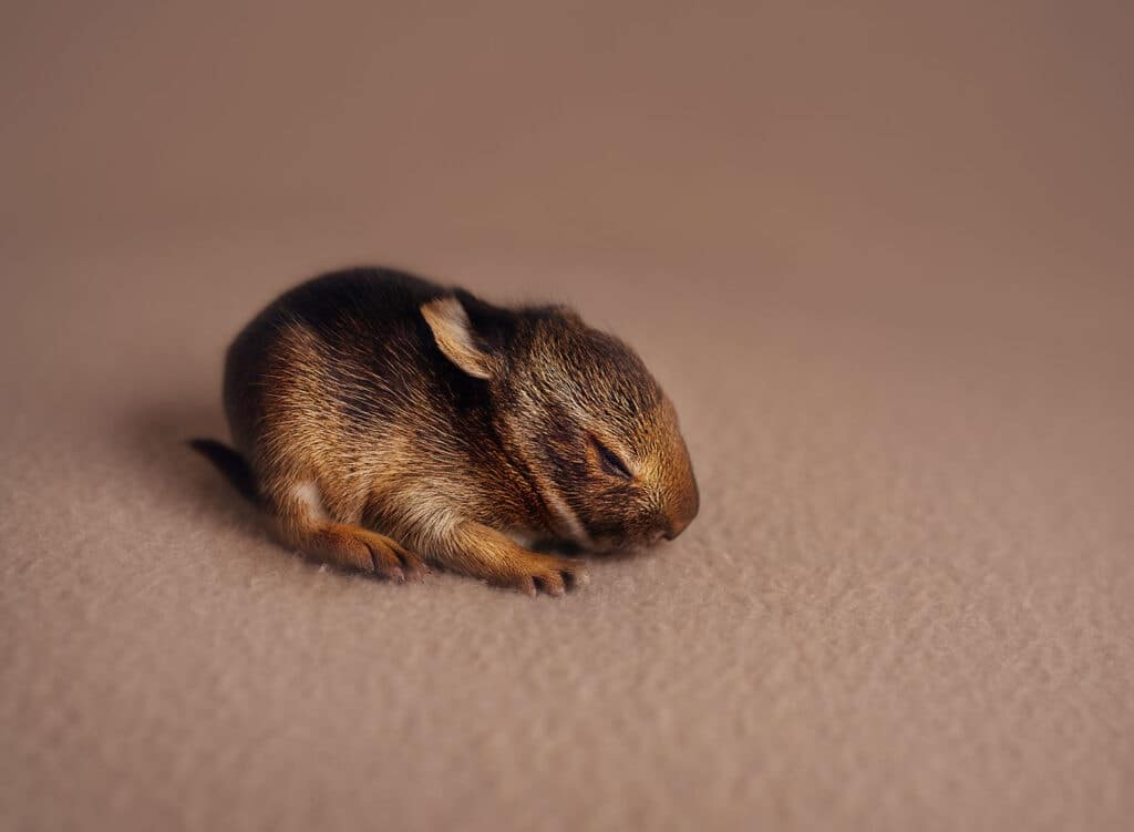 newborn bunny found outside