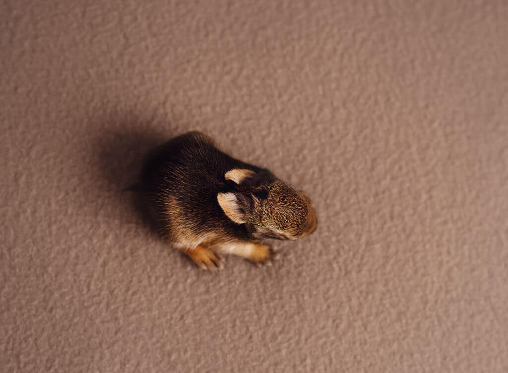 tiny newborn bunny