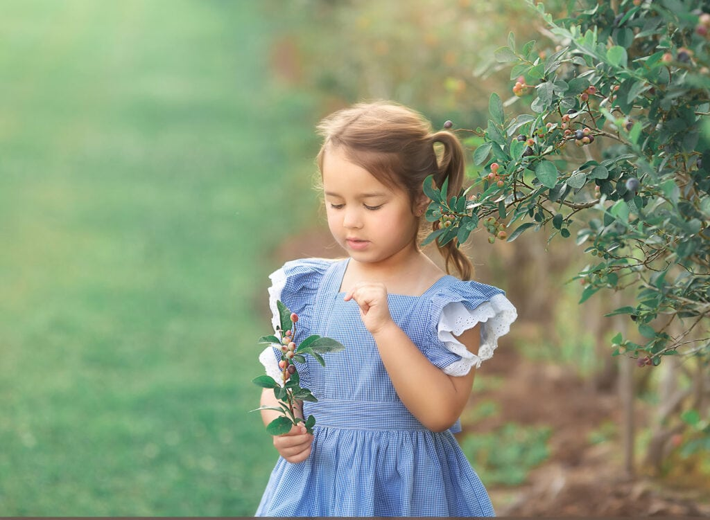 5 year old picking blueberries